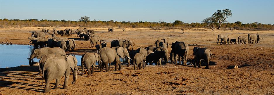 Hwange | Zimbabwe Luxury Safaris | Luxury Africa Safari | Ker Downey