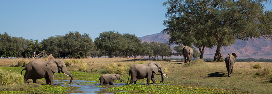 Mana Pools National Park | Mana Pools | Zimbabwe Luxury Safari
