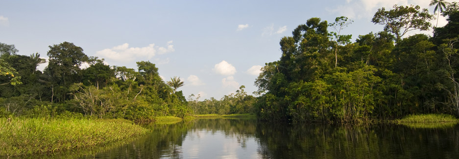 Northern Amazon | Brazil Luxury Travel | Rainforest
