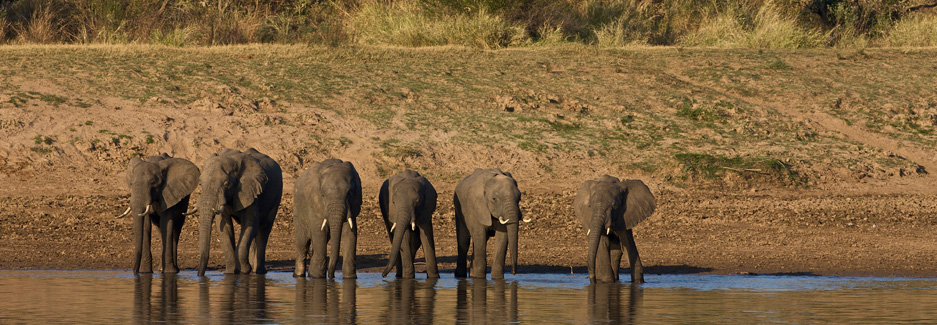 South Luangwa | South Luangwa National Park | Zambia