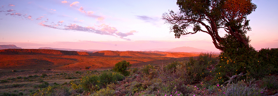 Western Cape | Sanbona | South Africa Luxury Safari