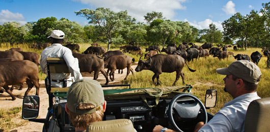 On Safari in Southern Africa