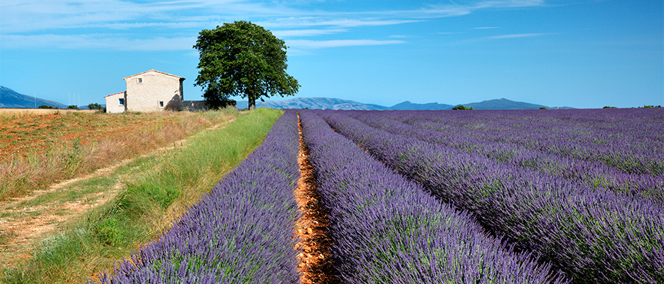 France wine tours in the lands of Provence create unforgettable romantic evenings along the rich countryside.