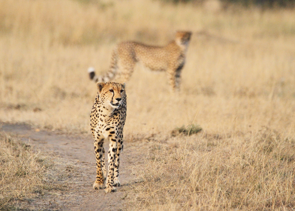 Photography Tips for Safari - Luxury African Safari - Ker Downey