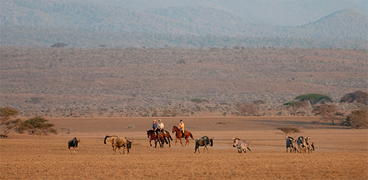 A Kenya Horseback Riding Safari