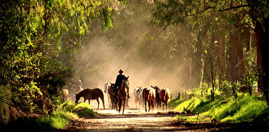 Ecuador Horseback Riding Adventure