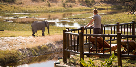 A Botswana Luxury Safari
