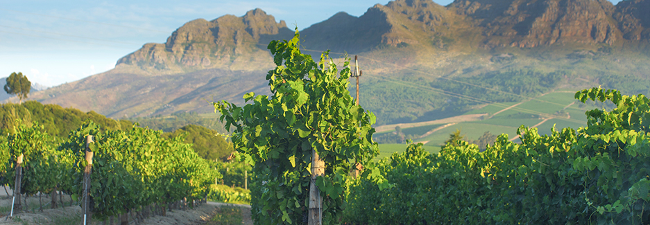 Winelands | Winelands South Africa | Luxury South Africa | Ker & Downey