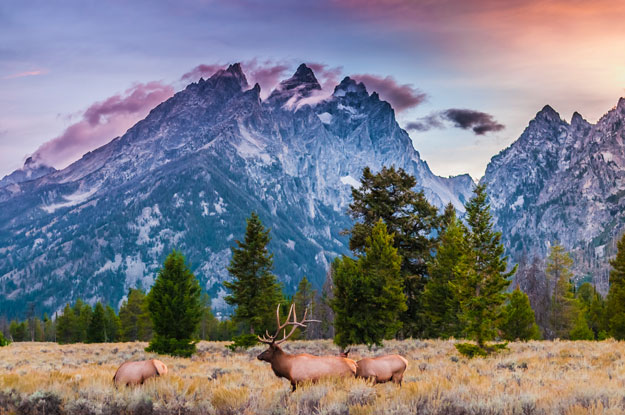 National Parks | Grand Teton National Park | Luxury North America Holidays | Ker Downey