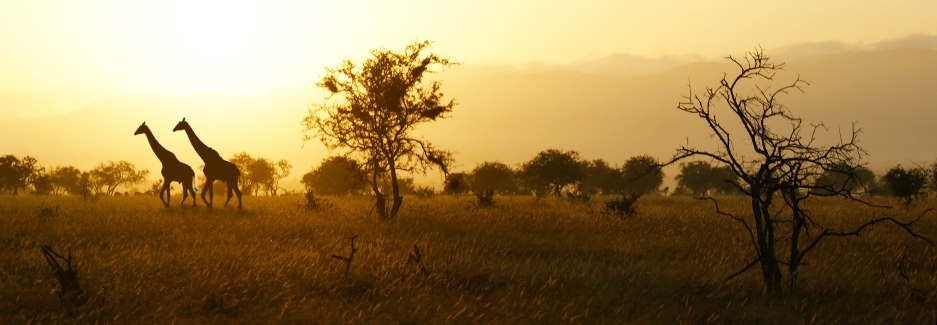 Tsavo National Park | Tsavo | Kenya luxury safari