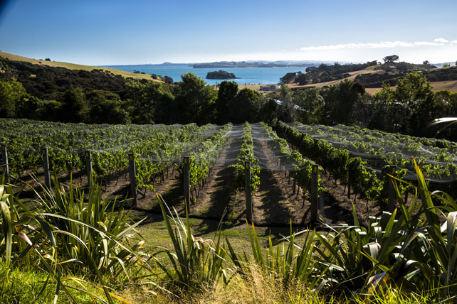 Waiheke Island | Luxury New Zealand Travel | Vineyards | Ker Doweny