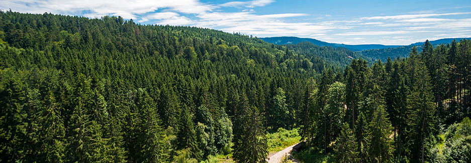 Black Forest and Southwest Germany   Luxury Black Forest
