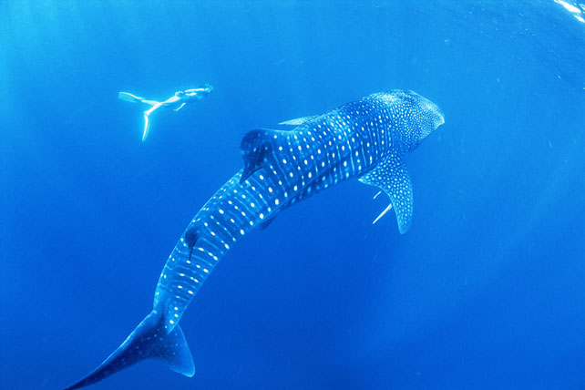 UNESCO World Heritage Sites | Ningaloo Reef | Luxury Australia Travel | Ker Downey