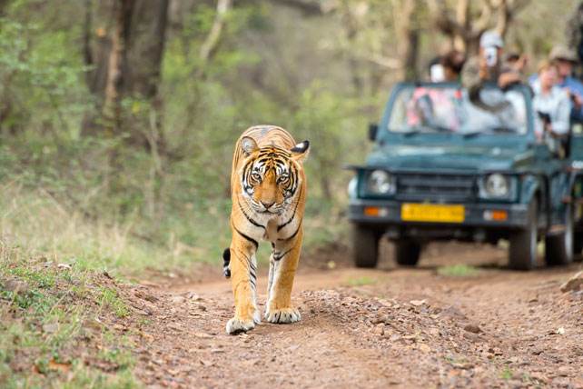 2016 Top Travel Destinations | Luxury Tiger Safaris | India | Ker Downey