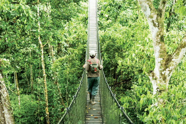 The Top 7 Canopy Walkways in the World