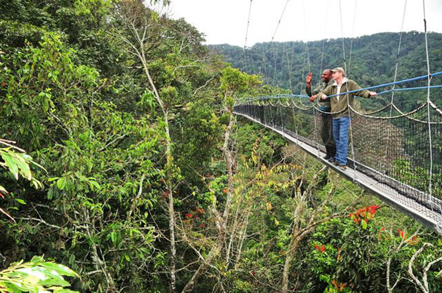 Canopy Walkways | Nyungwe Forest Lodge | Luxury Rwanda | Ker Downey & Canopy Walkways | Top 7 Canopy Walkways in the World