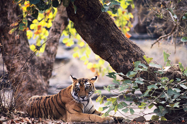 Best Places to Travel in May | Luxury Tiger Safari | India | Ker Downey