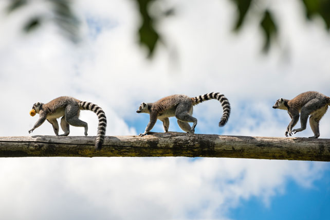 Luxury Primate Safaris | Madagascar | Ker Downey