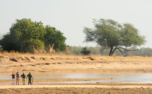 Luxury Zambia Walking Safari | Ker Downey