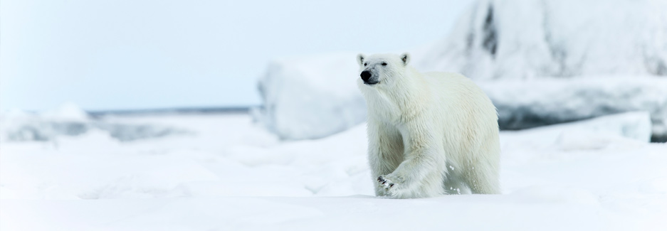 Norway Arctic - Arctic Safari - Luxury Arctic Safari - Svalbard Islands - Ker Downey
