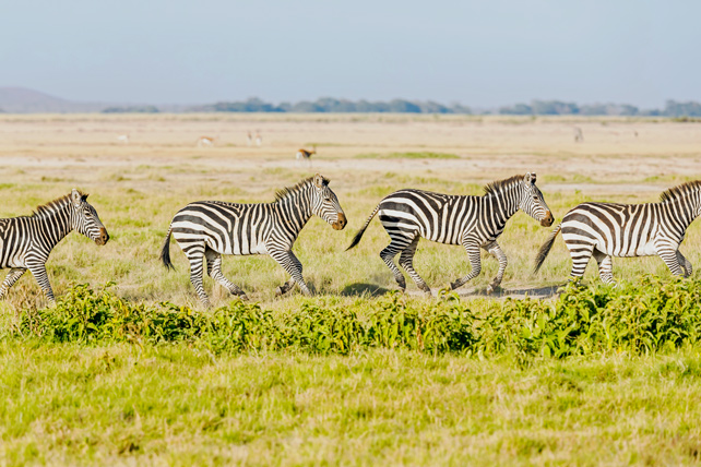 African Safari in November - Luxury Safari - Ker Downey