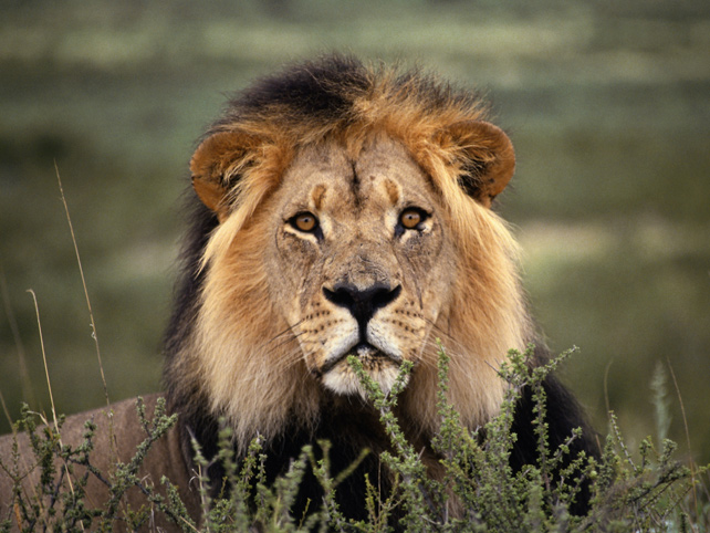 world-lion-day-luxury-safari-ker-downey-2