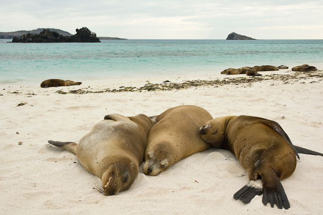 Best Places to Unplug with Family - Luxury Family Travel - Ker Downey - Galapagos