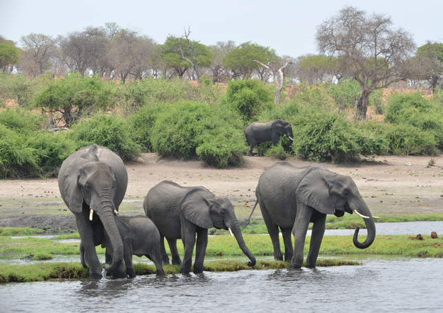 Luxury Travel to Botswana Chobe National Park - Ker Downey