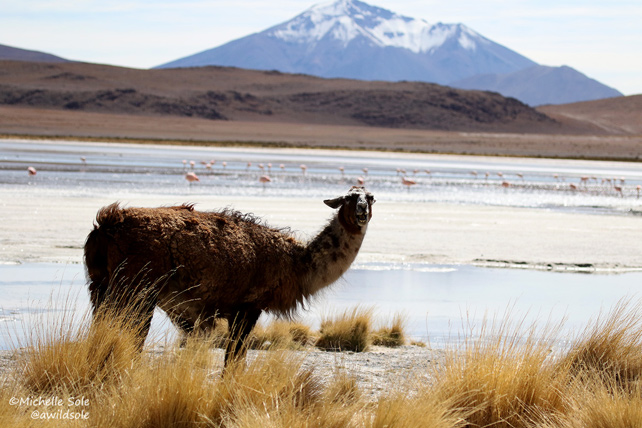Luxury Bolivia Uyuni Tour - Michelle Sole - Ker Downey