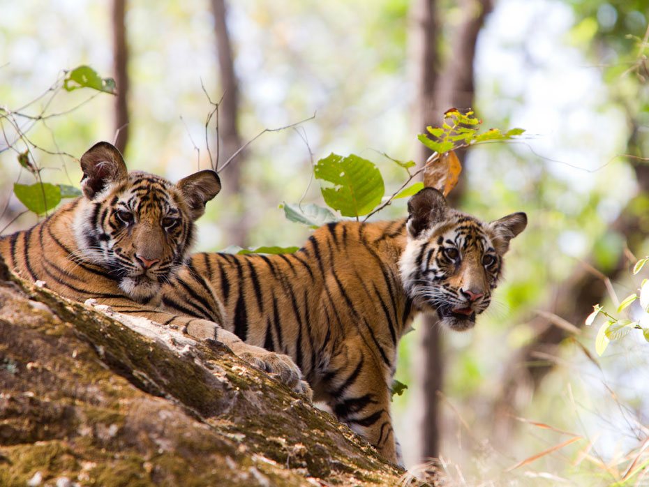 Safaris around the World - Luxury Safaris - Ker Downey - Tiger Safari in India