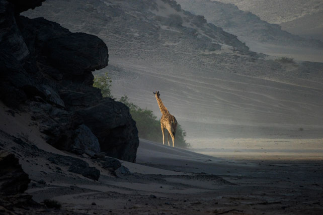 In the Moment: A Luxury Namibia Safari in Photographs